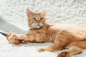 Fotografie beautiful furry ginger cat lying on white carpet and looking up