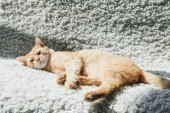 high angle view of beautiful red cat lying on white carpet and looking at camera