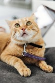 close-up view of adorable red cat looking up