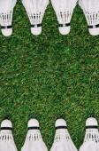 pohled shora bílé opeřené uspořádány na zelené trávě