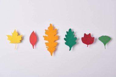 top view of colorful leaves made of paper arranged on white background
