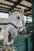 Fotografie cropped image of person feeding white horse in stable at farm
