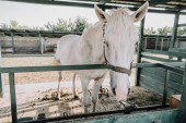 Fotografie beautiful white horse standing in stable at farm