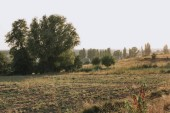 Photo scenic view with field and trees in countryside