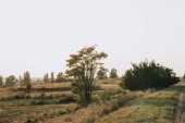 Photo rural scene with field and trees in countryside