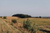 vista panoramica con campo rurale e alberi durante il giorno