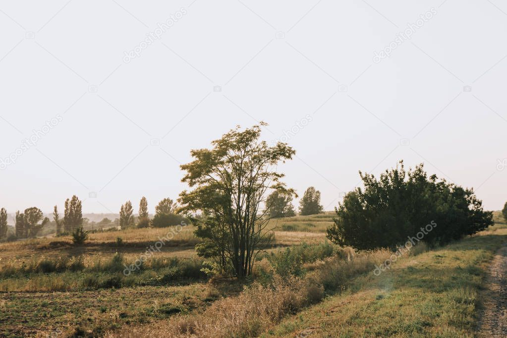 rural scene with field and trees in countryside
