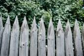 Fotografie zelené listy za dřevěným plotem zaostřené