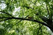 pohled zdola roztomilá veverka sedí na stromě