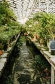 különböző növények növekvő cserépben, a orangerie
