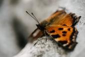 Close-up shot Krásný motýl sedí na kameni