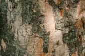 Detailní záběr termitů vzorované stromová kůra slunečním záření