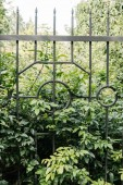 Fotografie green branches behind fence in botanical garden