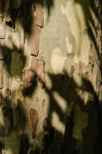 Fotografie close-up shot of cracked tree bark under sun rays