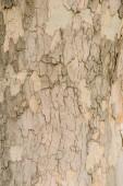 Fotografie Detailní záběr světla popraskané stromová kůra