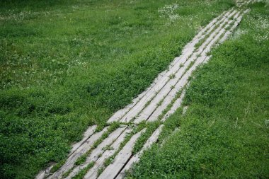 footpath made of wooden planks surrounded with green grass