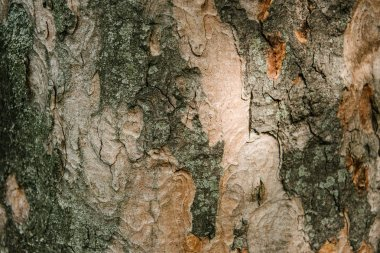 Close-up shot of termite patterned tree bark under sunlight stock vector