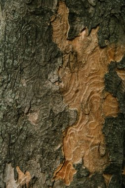 Close-up shot of termite patterned tree bark stock vector