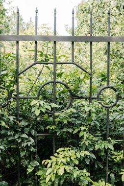 green branches behind fence in botanical garden