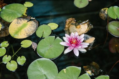 high angle view of water lily growing in pond