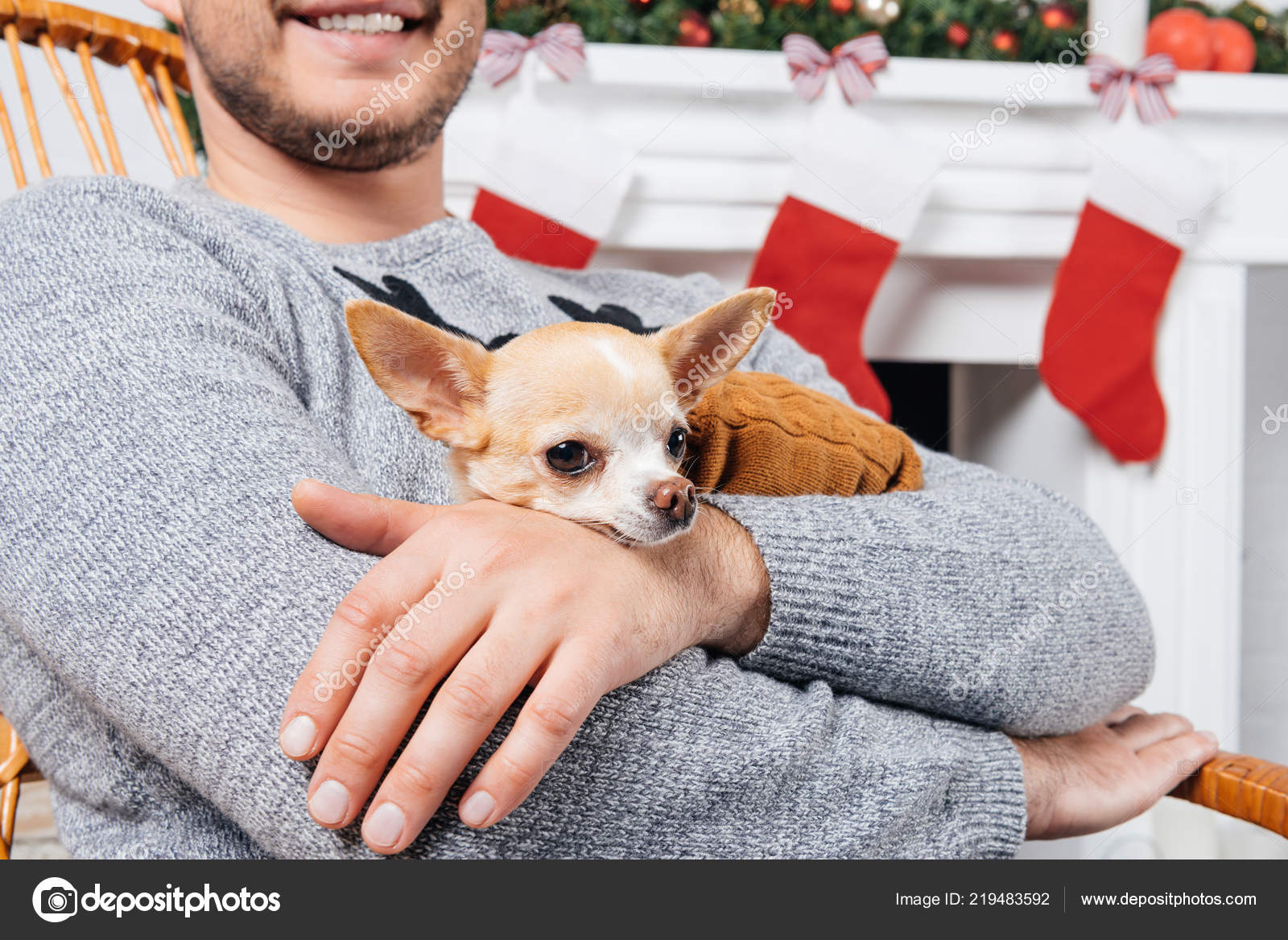 Peachy Cropped Shot Man Rocking Chair Holding Little Chihuahua Dog Squirreltailoven Fun Painted Chair Ideas Images Squirreltailovenorg