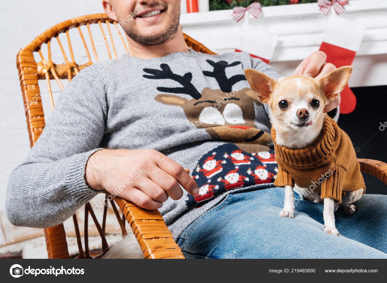Stupendous Partial View Man Rocking Chair Little Chihuahua Dog Knees Squirreltailoven Fun Painted Chair Ideas Images Squirreltailovenorg