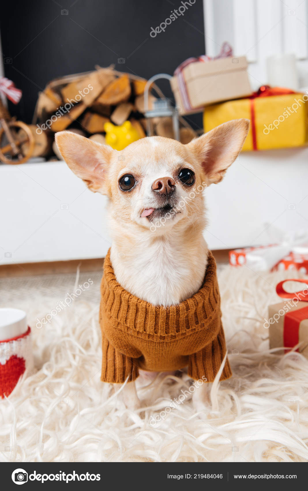 Little Chihuahua Dog Sweater Cup Hot Drink Christmas Gifts Stock