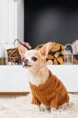 zár megjelöl kilátás a chihuahua kutya-ban pulóver kandalló mögött