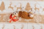 zpětný pohled roztomilý čivava pes ve svetru, ležící poblíž vánoční dárek