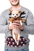 Fotografia ritagliata colpo delluomo in maglione invernale festivo che tiene piccola chihuahua cane isolato su bianco