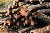 Detailní záběr ze skládaných dřevěných hranolů poblíž spadané listí