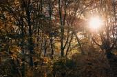 Slunce skrze větvičky stromu v klidném lese