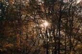 Sole attraverso ramoscelli dellalbero nella sosta di autunno