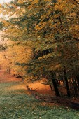 Fotografie autumn leaves on tree twigs in peaceful forest