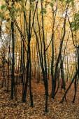 Žluté listí na zemi nedaleko stromy v lese