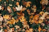 Zlaté listí na zelené trávě