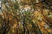 Fotografie Pohled zdola podzimní stromy s větvičkami v lese