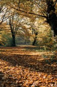 Sunshine na spadané podzimní listy v parku