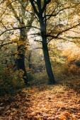 Fotografie Sunshine on fallen leaves in autumn forest
