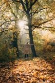 Zadní pohled na ženy stojící s rukama šíření v podzimním lese