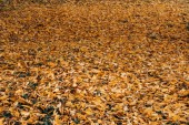 Photo Fallen dry leaves in autumn forest