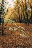 Messa a fuoco selettiva di foglie verdi sui rami degli alberi in Foresta dorata
