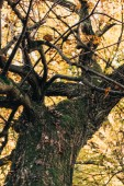 Photo Selective focus of old tree with yellow leaves