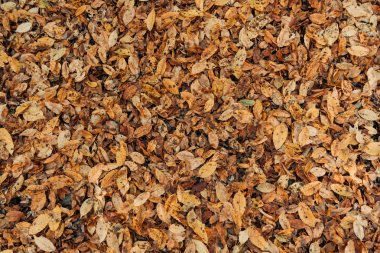 Close up of dry fallen leaves on ground stock vector