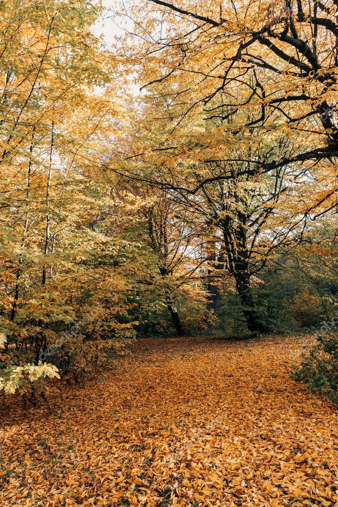 Фотообои Golden fallen leaves near trees in forest