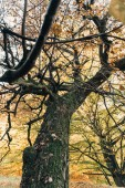 Selective focus of old tree with leaves on branches