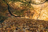 Selektivní fokus spadaného listí v podzimním lese