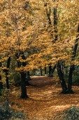 Photo Golden leaves on tree twigs in autumn forest