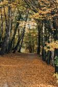 cesta s spadané listí v klidné podzimní les