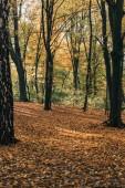 Gialli foglie cadute vicino agli alberi nella foresta di autunno